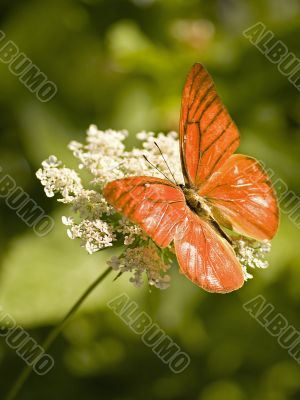 orange albatross resting on queen anne`s lace