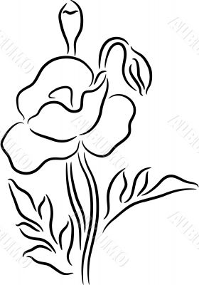 Poppy Flower contour