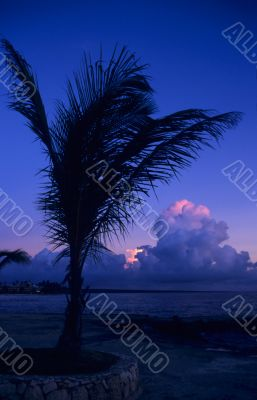 Dusk of sunset on palm tree at Bayahibe beach