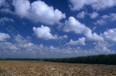 Sugar cane plantation in Dominican republic