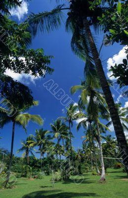 Palmtree garden in Dominican republic