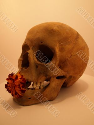 human skull with a flower. workshop of the artist. August 2009