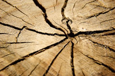 Brown circular cross section of tree