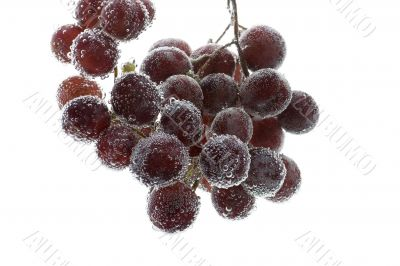 Red grapes in water closeup