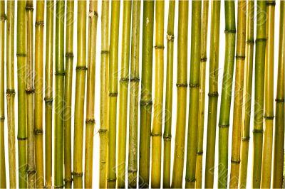 trunks of bamboo