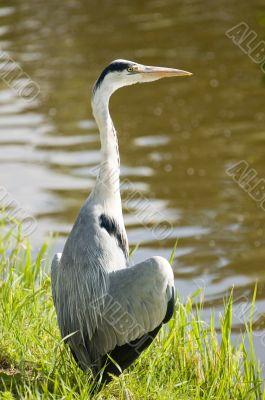 Wildlife - birds