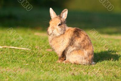 Small rabbit on grass