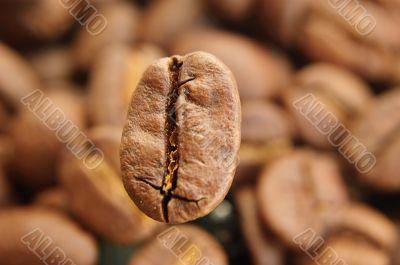 One big coffee bean in focus