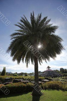 Sun shining through the palm tree