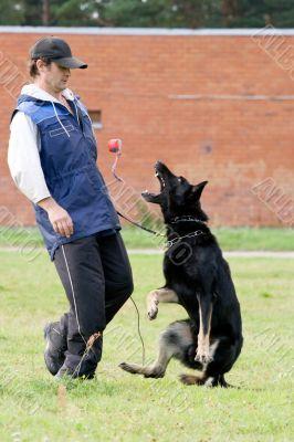figurant and German shepherd