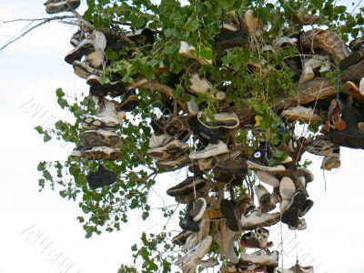 Shoe Tree1