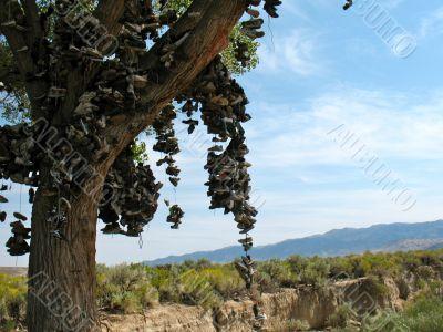 Shoe Tree2