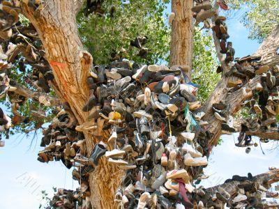 Shoe Tree4