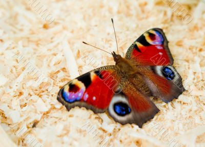 Butterfly on abstract background close-up