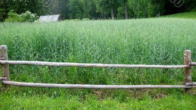 Plot rye in outskirts