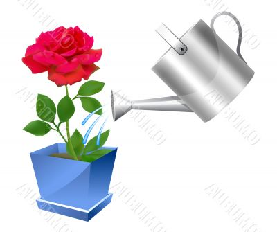 Realistic watering can with rose illustration