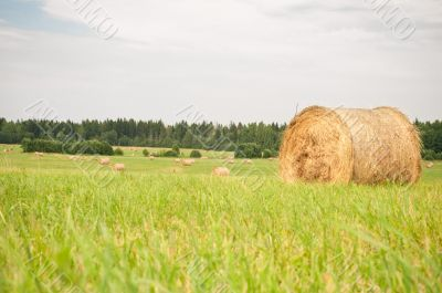 Hay on the field