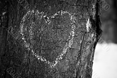 Heart drawn on tree trunk