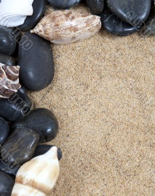 Nice sea shells on the sandy beach taken closeup, Shell border or frame