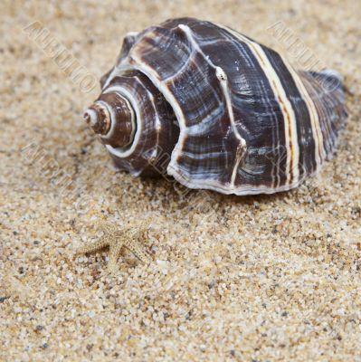 Nice sea shells on the sandy beach taken closeup