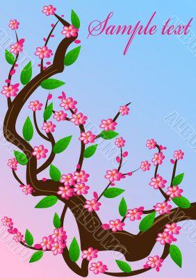 background cherry blossom