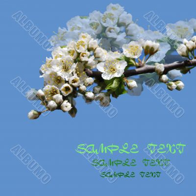 branch tree with  flower
