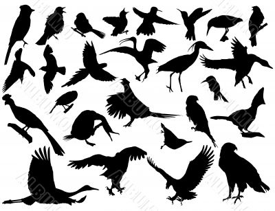 vector silhouettes of birds