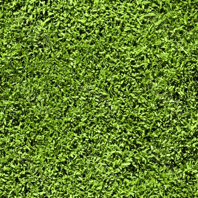 Grass seamless pattern