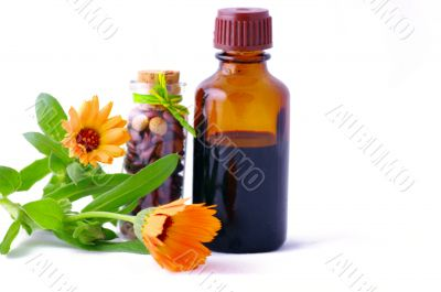 Herbal medicine with herbs . Isolated white background. Studio s