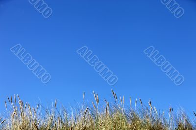 clear blue sky with grasses in the foreground