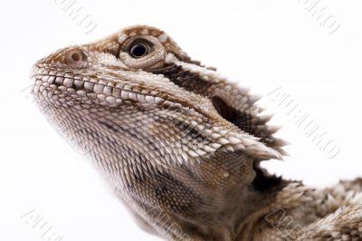 The head of a lizard.