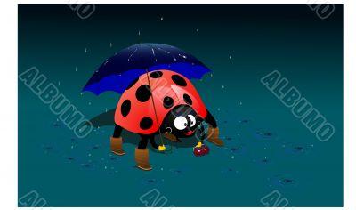 ladybird  under an umbrella