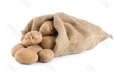 Raw potatoes isolated