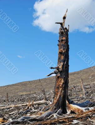 Stump scorched