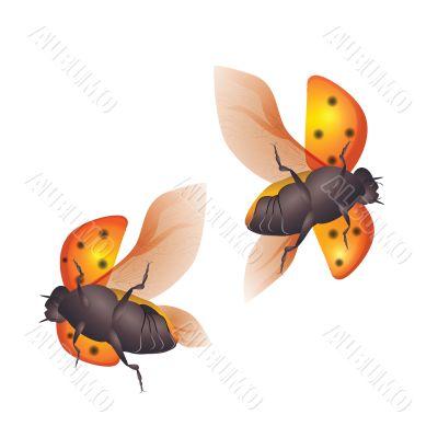 ladybirds - flying
