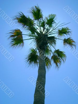 palm, tree, tropical, nature, summer