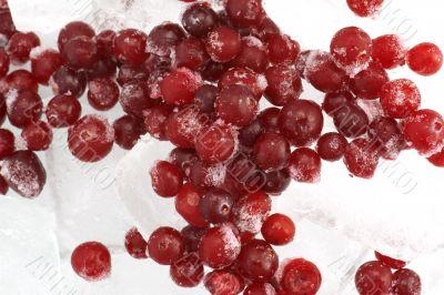 cranberry macro