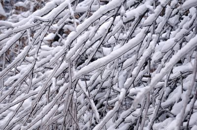 Closeup Icy Tree Twigs