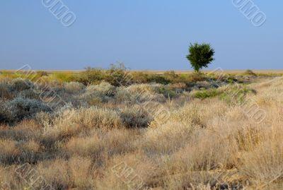Lone Tree in Savanna