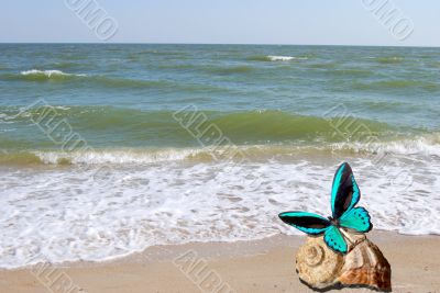 butterfly sits on seashell