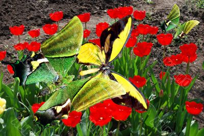 yellow brilliant butterfly