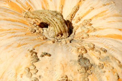 Gourd background with stem