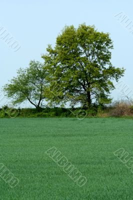 Trees and grassy field
