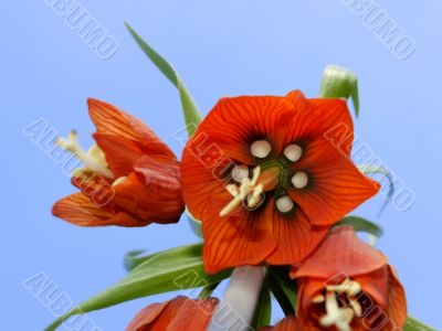 Orange flower. View from below