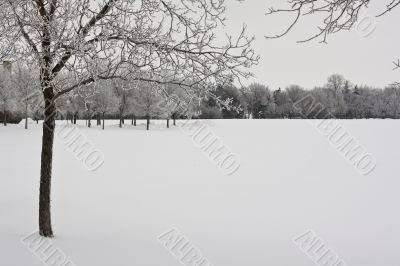 Trees on a snow covered park