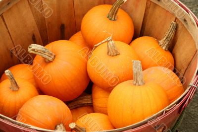 Bunch of small pumpkins in a basket