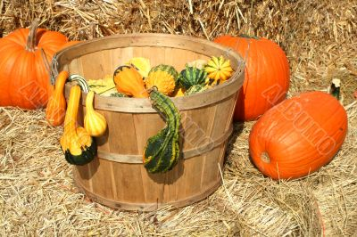 Bunch of gourds in a basket with hay