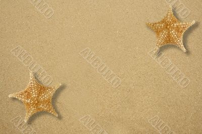 Two star fish on the sand
