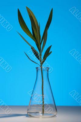 Branch oleander