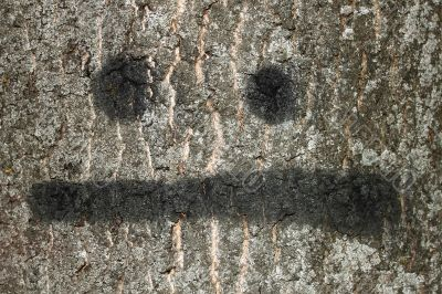 Bark of tree with painted smile